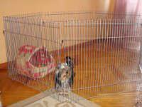 Как приучить маленькую собаку к лотку