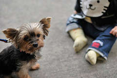 Маленький ребенок и собака