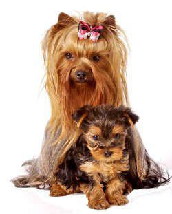 Клички для собак девочек