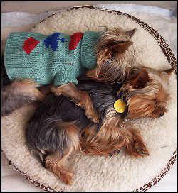 Уголок маленькой собаки