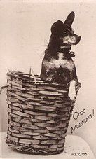 Карликовый пинчер на фото 1910 года.