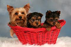 Социализация среди собак