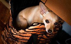 Как позаботиться о безопасности собаки